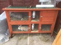 Male and female rabbit for sale with hutch £65