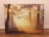 BARGAIN: Canvas Print of Sunlit Forest
