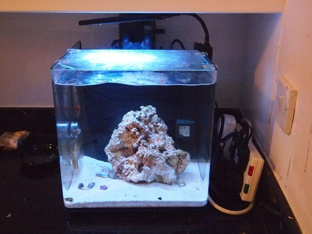 What would be a good clean up crew? - The Reef Tank