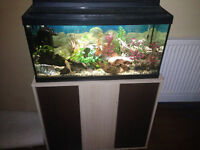 2 1/2 foot fish tank ready to go