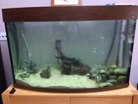 180l bow front fish tank setup