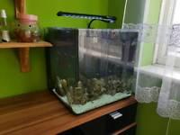Fish tank aquanano40. 55L with filter heater etc