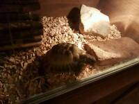Tortoise and enclosure