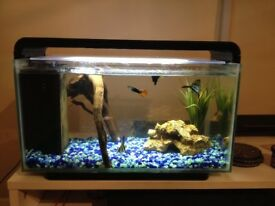 Fish for sale with 25l tank