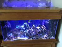 Marine tank with Solid Oak stand and Pelmet