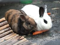 2 rabbits, hutch and run