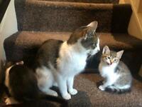 Playful 8 week old kittens