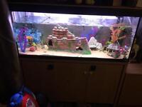 Fish tank Roma 240