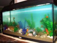 JUWEL 96 Aquarium ( 21 gallon )