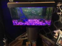 Aquarium with stand + more