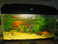 fish tank with 3 fishes,fish food and accessories just 20 pounds