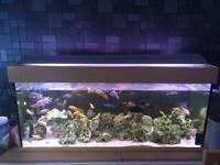 Four foot fish tank full set up