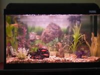 Established tropical fish tank complete with fish, filter, heater and accessories