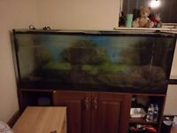 5 ft Fish Tank with stand quick sale only 160