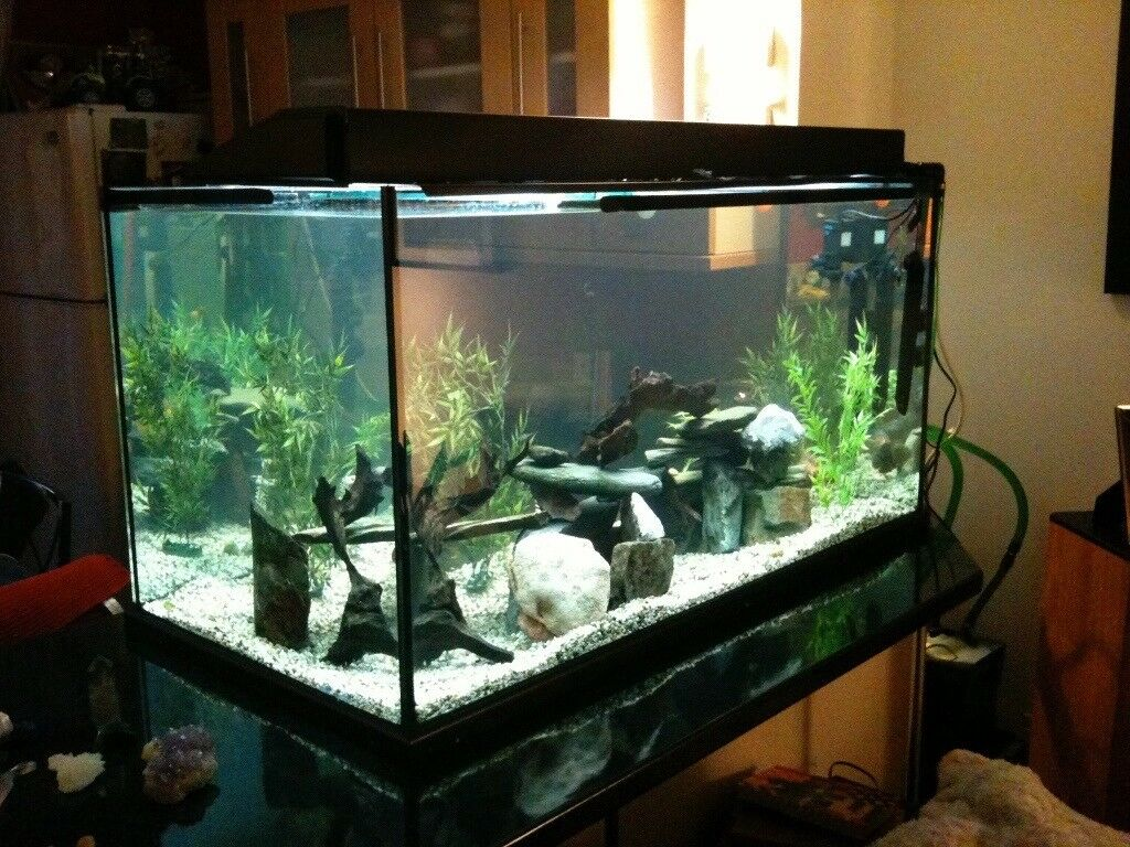 Large fish tank 4ft x 2ft x 2ft 450 litre black for Large fish tank