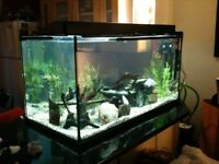 Large Fish Tank 4ft x 2ft x 2ft (450 Litre). Black Silicone. With all the trimmings