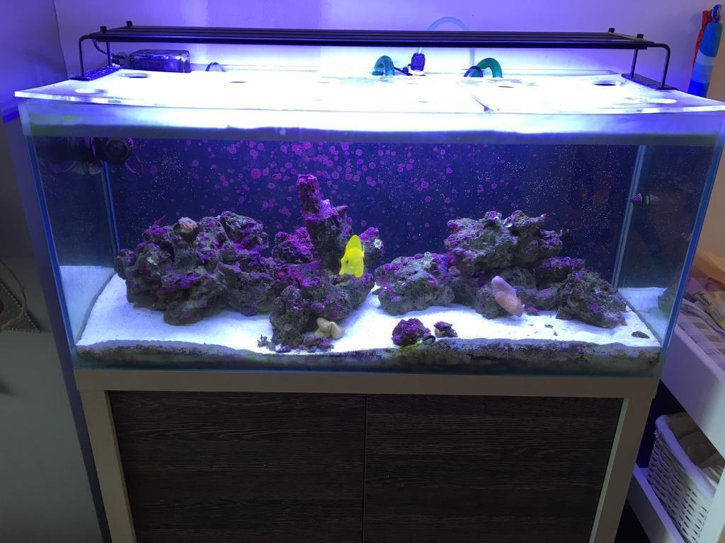 Fluval m90 marine fish tank complete set up with live rock for Fluval fish tank filter