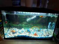 Fish tank with Fish and spare filter and extra decorations (not pictured)