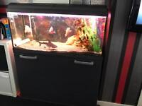 Interpet 160L fish tank with everything