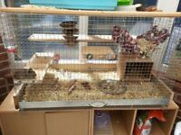Degus and cage for sale