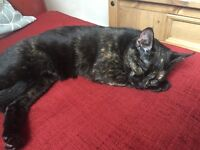 10 month old tortoiseshell cat free to good home