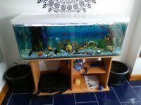4'x1' Large fish tank and stand with many item and few fishes