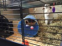 Very large rabbit cage for sale