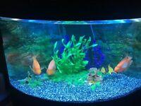 Aquarium Full Setup With Fish For Sale