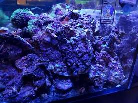 Premium live rocks. Real reef rocks and dry Fiji rocks and tonga branches for marine aquarium