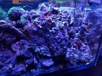 Premium live rocks. Real reef rocks and dry Fiji rocks and tonga branches for marine aquarium