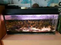 80 litre fish tank with bubbler, filter and light