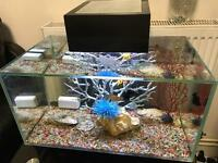 Fish tank fluval edge 23Lt with 3 tropical fishes and ornament