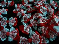 24 RED LACE BOWS