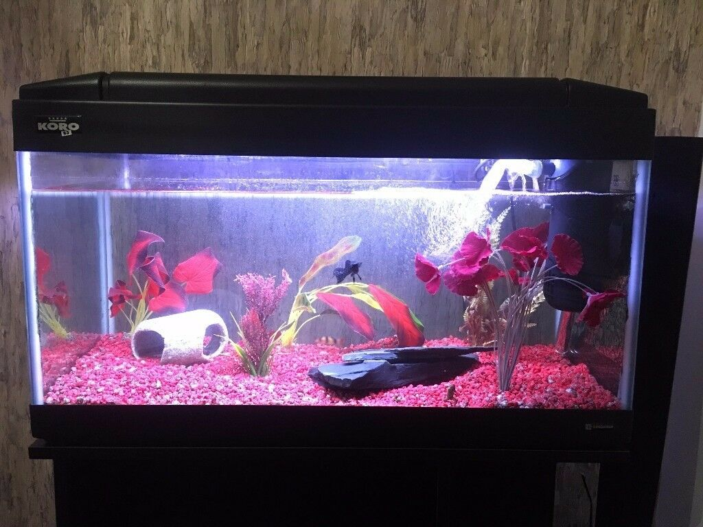 120L tropical aquarium with stand, pump, filter, fish, frogs etc.