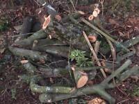 TREE LOGS for BONFIRE