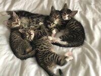 4 Adorable Kittens