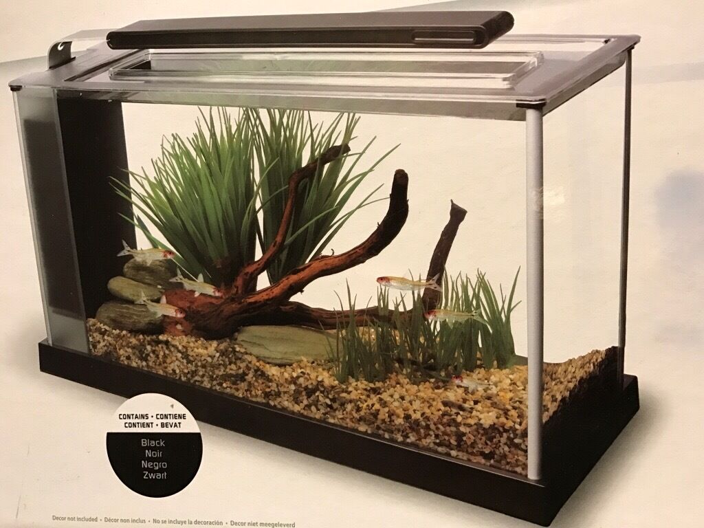 Freshwater aquarium fish no heater - Lovely Fish Tank With Heater And Lots Of Assesaries In Hanham Bristol Gumtree