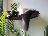 Cat furniture - wall mounted cat bed