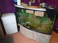 6 foot curved fish tank/ aquarium on stand £60 ONO