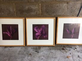 Three lovely flower pictures. Collection only. £15 for all 3.