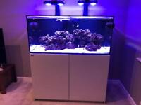 Red Sea reefer 425xl set up for SPS