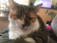 4 year old cat Bella!wanting her to go to a loving home only!!!