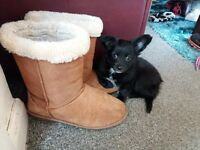 Beautiful Papillion x Chihuahua Puppy 9 Weeks Old - Girl