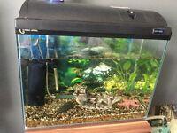 Tropical fish tank and fish 😊