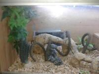vivairan lizard or reptile tank