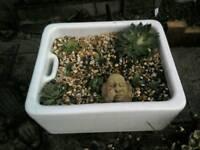 Butlers Sinks, Ideal Garden Planter/Herb Garden