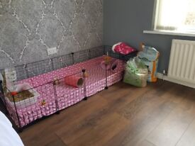 2 Guinea Pigs, 5x2 C&C Cage+Liners and accessories