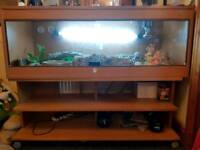 4ft viv comes with 2x corn snakes and more