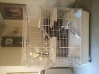 Marshall ferret townhouse cage