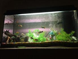 Fish and Fish Tank Tropical Aquarium, Filter, Heater, Pump, Lights, Hood & Accessories